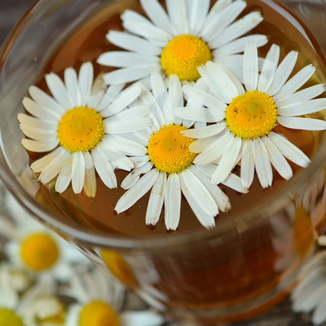 SWIHA-Tea-Blog-CHAMOMILE