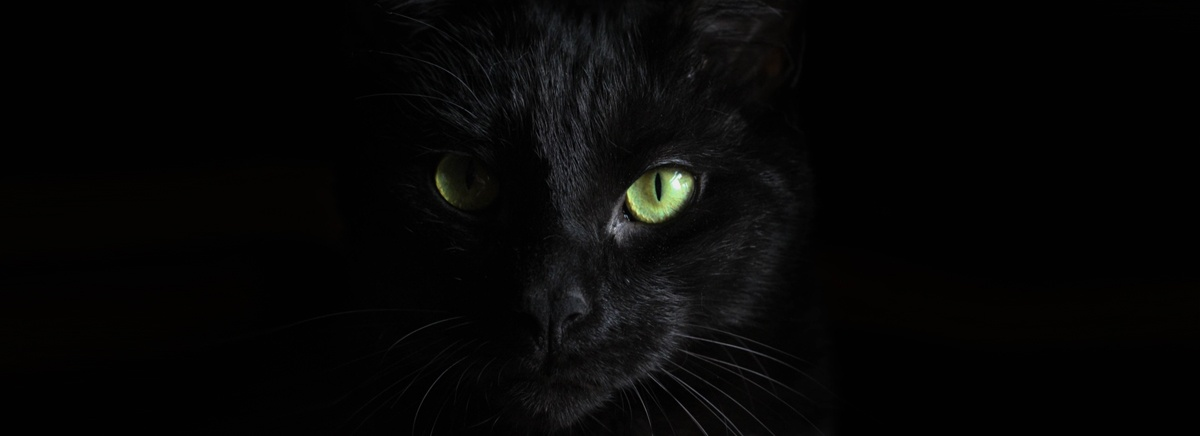 Halloween-SWIHA-Blog-Divider2