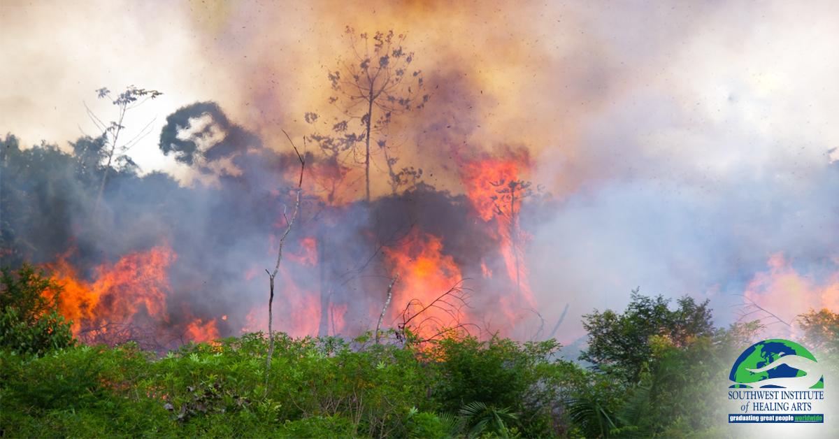 Save-The-Rainforest